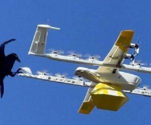 Drone di Google Alphabet fermato dai corvi